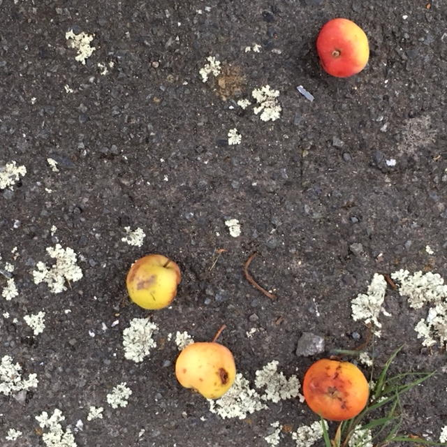 Crab-apples and lichen on Queen Street footpath
