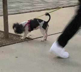 Dog leg