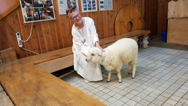 Rachel patting a sanitised sheep indoors