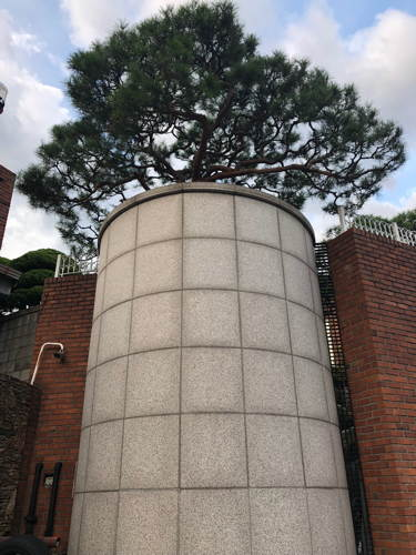 Garden pine tree in Seoul at the top of a small tower