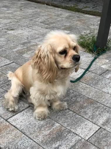 toy-dog-Seoul-web